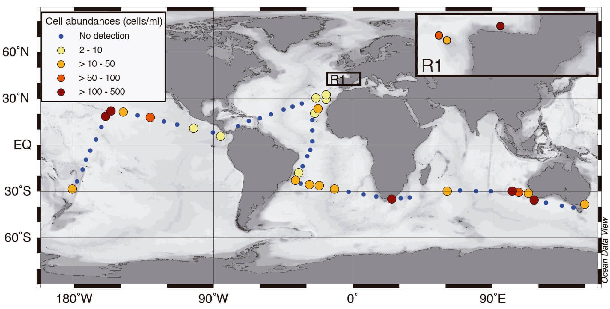 Global distribution of prymnesiophyte hosts in surface waters: Cell abundances of the prymnesiophyte–UCYN-A1 symbiosis along the MALASPINA and INDEMARES cruises determined by double CARD-FISH.